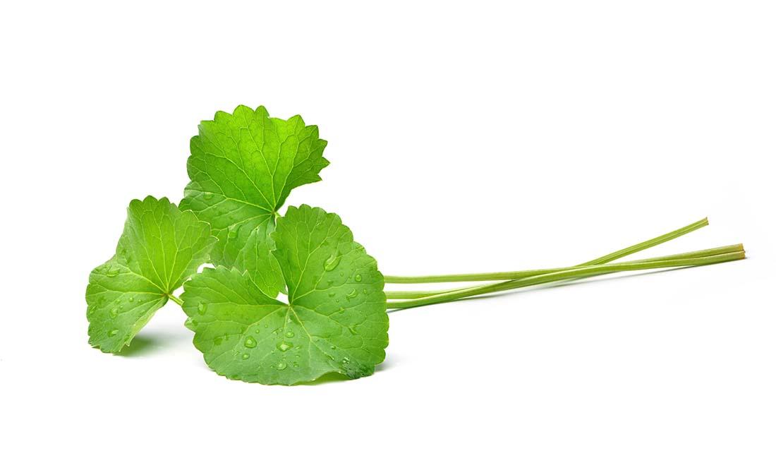 gzg-centella-asiatica-leaves