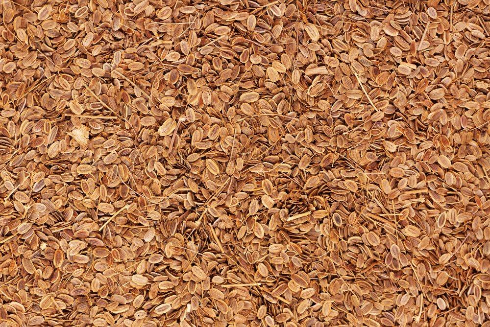 Dill Seeds (Sadhakuppai)
